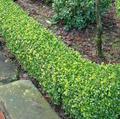 Horticulture yernault – Vente de plantes, arbustes, haies